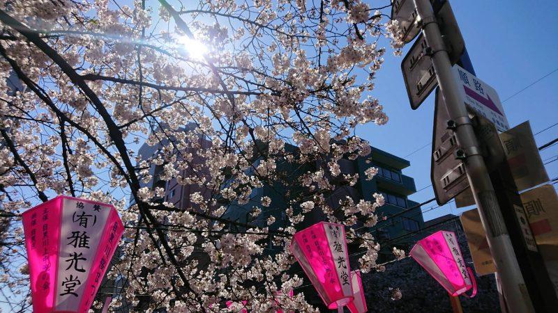 「春のかほりがする目黒川」の巻